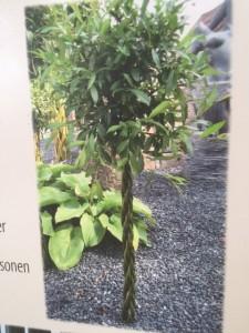 Salix flätad
